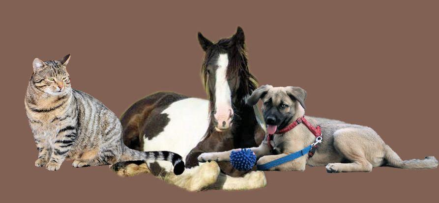 kr uter f r tiere kr uter f r pferde kr uter f r hunde kr uter f r katzen kr uter f r kleintiere. Black Bedroom Furniture Sets. Home Design Ideas