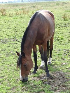 Pferdeerfahrungen tierheilpraxis