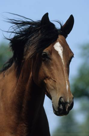 Mineralstoffversorgung bei Pferden