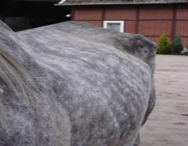 Pferdeerfahrungen mit Haaranalysen