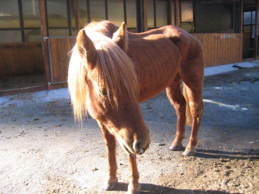 Pferdefutterberatung