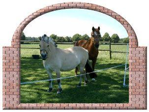 Pferdefütterung alter Pferde