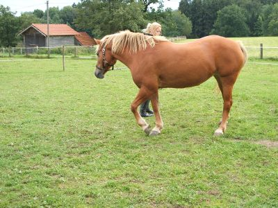 Erfahrungen mit Pferden tierheilpraxis