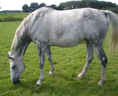 Haaranalysen Erfahrungen bei Pferden