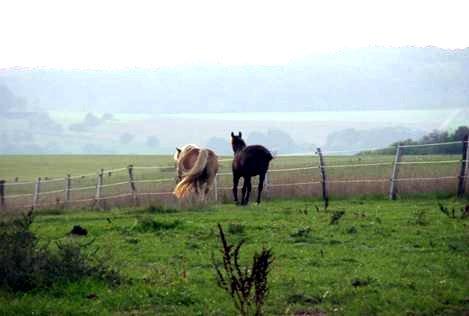 Pferdealtenheim