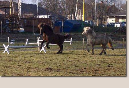 Pferde Erfahrungen