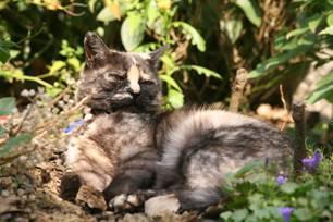 Leberkrankheiten bei Katzen