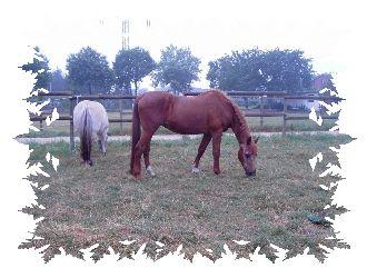 Erfahrungen Pferd