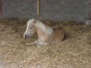 Pferdefutter