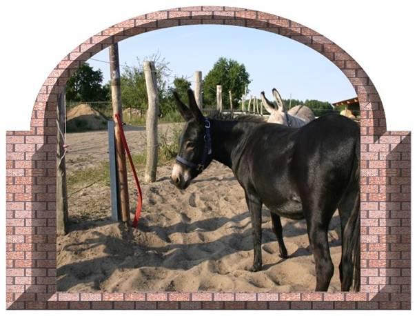 Hufreheerfahrungen mit Esel