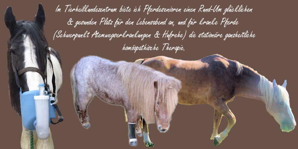 Homöopathische Pferdeklinik