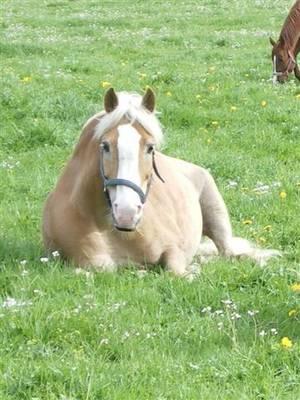Erfahrungen mit der Biofeld-Haaranalyse bei Pferden