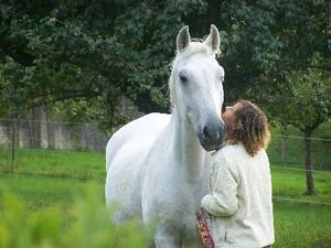Haaranalysenerfahrungen mit Pferden