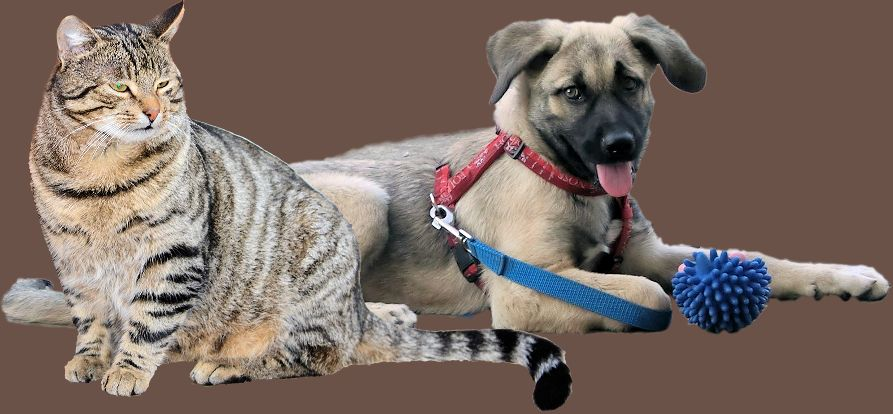 Kranke Hunde, kranke Katzen, kranke Kleintiere