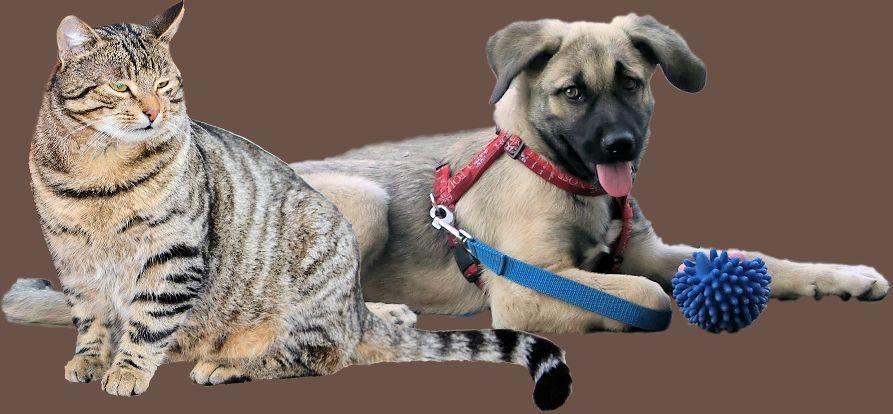 Hund krank-Katze krank-Kleintier krank
