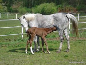 Erfahrungen bei Pferden Haaranalyse
