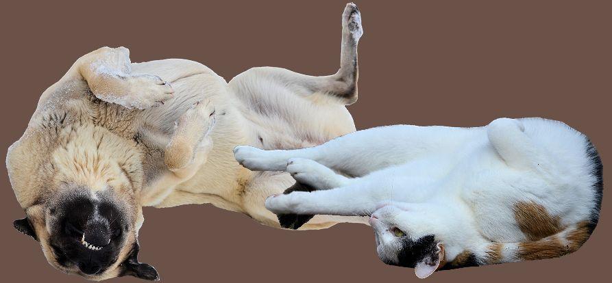Epilepsie Hund, Epilepsie Katze