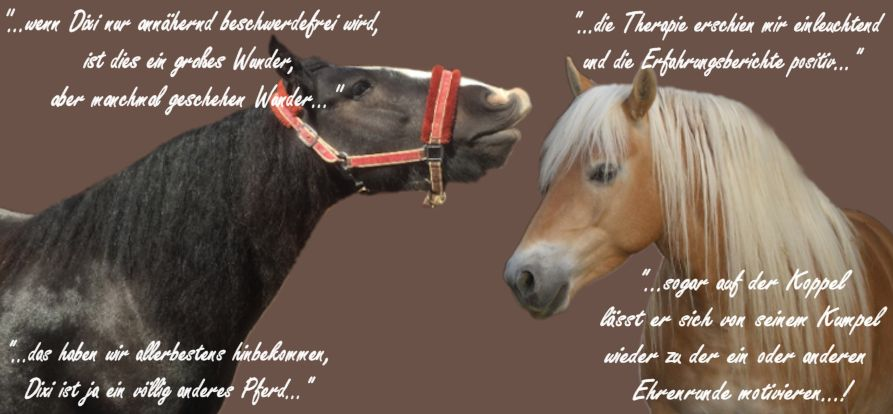Erfahrungen Pferde