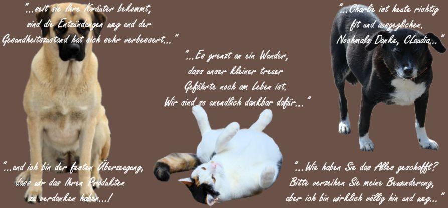 Tierheilpraxis Erfahrungen Hunde-Katzen