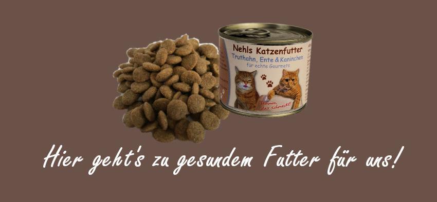 Katzenfutter, Katzen füttern, Katzenfütterung
