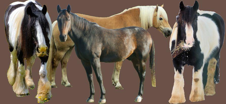 Haaranalyse Erfahrungen bei Pferden