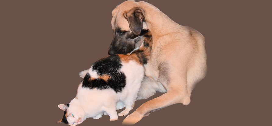 Hot Spots & Atopische Dermatitis bei Hunden & Katzen