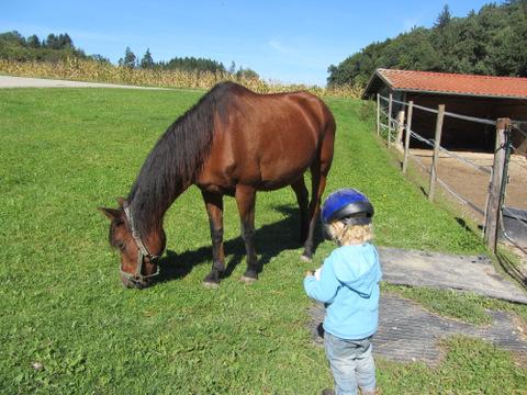 zu dünnes Pferd füttern