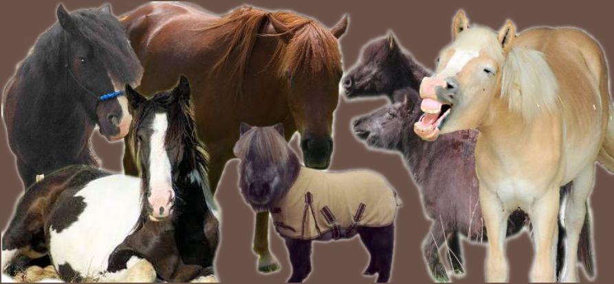 Fütterung alter Pferde-Fohlenfütterung