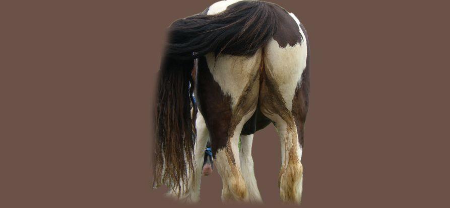 Durchfall Pferde, Kotwasser Pferde