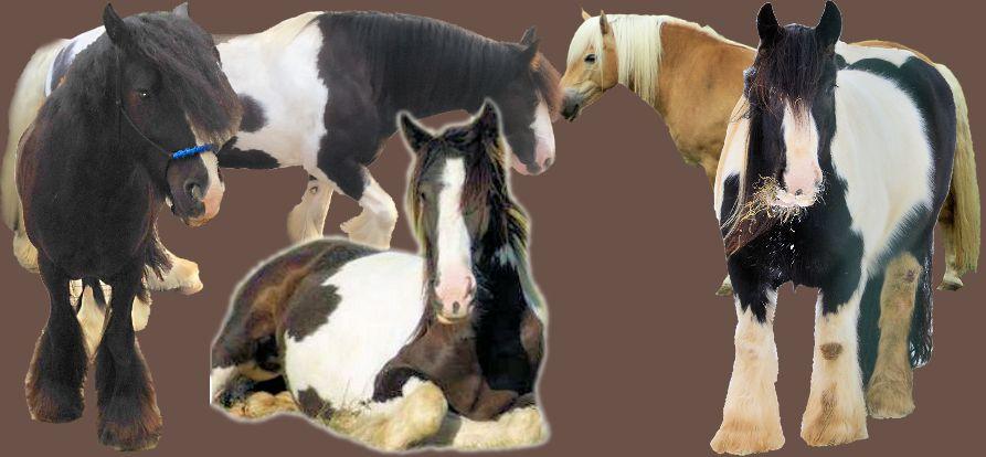 Welches Pferdefutter