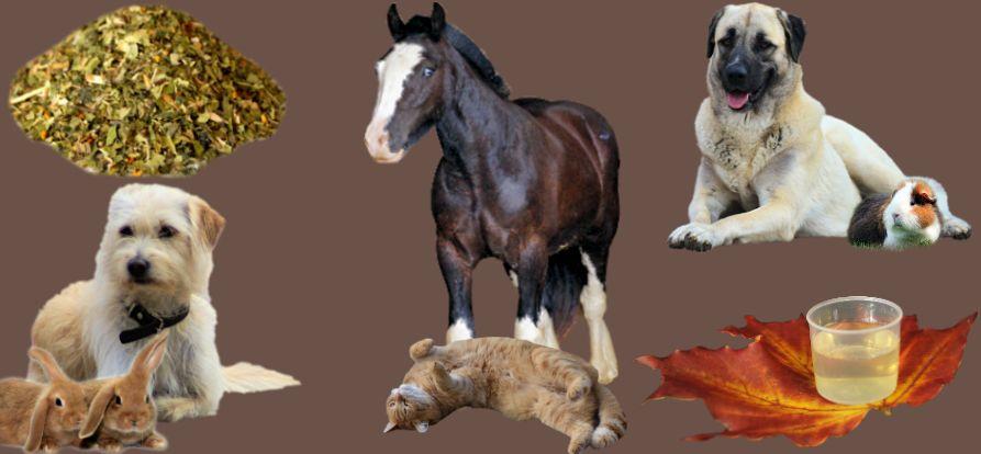 Kräuter Pferd-Hund-Katze