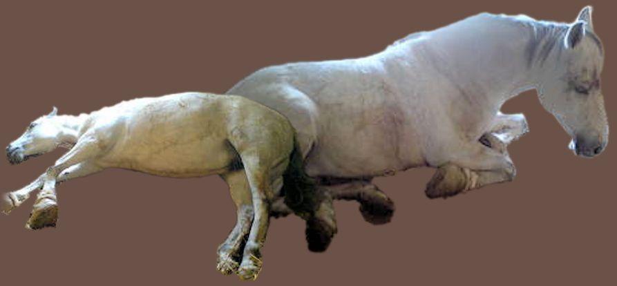 Kranke Pferde