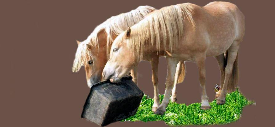Magen Pferde, Darm Pferde