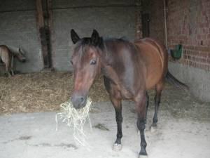 Heustauballergie bei Pferden