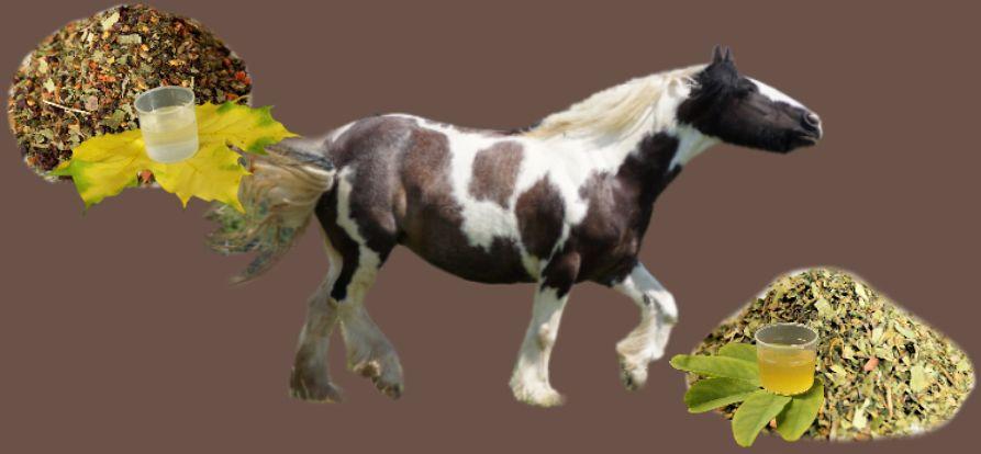 Kräuterfutter-Kräuterfütterung Pferd