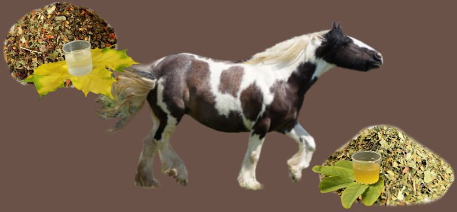 Individuelle Kräuter für Pferde