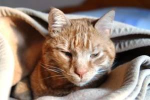 Harnsteinerkrankungen bei Katzen