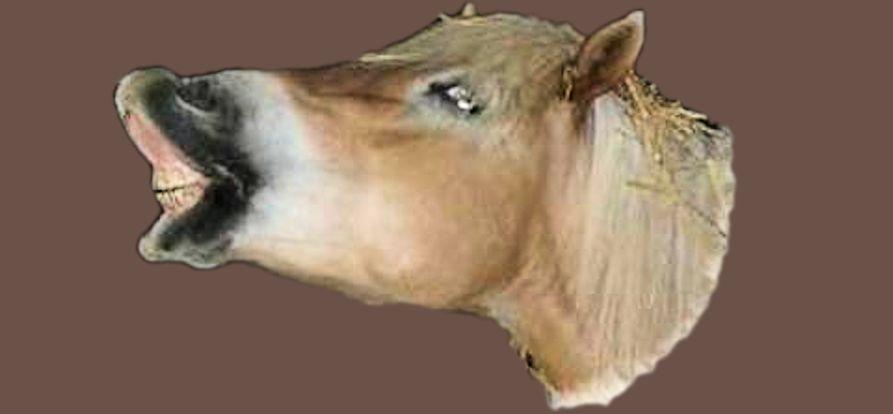 Tierheilpraxis Erfahrungen Pferde