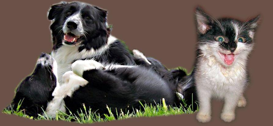 Entgiftung, Stoffwechsel, Hautstoffwechsel, Darmsanierung Hunde, Katzen