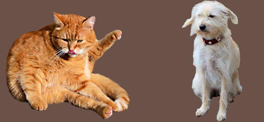 Struvite bei Hunden und Katzen