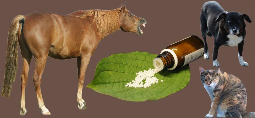 Haaranalysen Ablauf Pferde, Hunde, Katzen