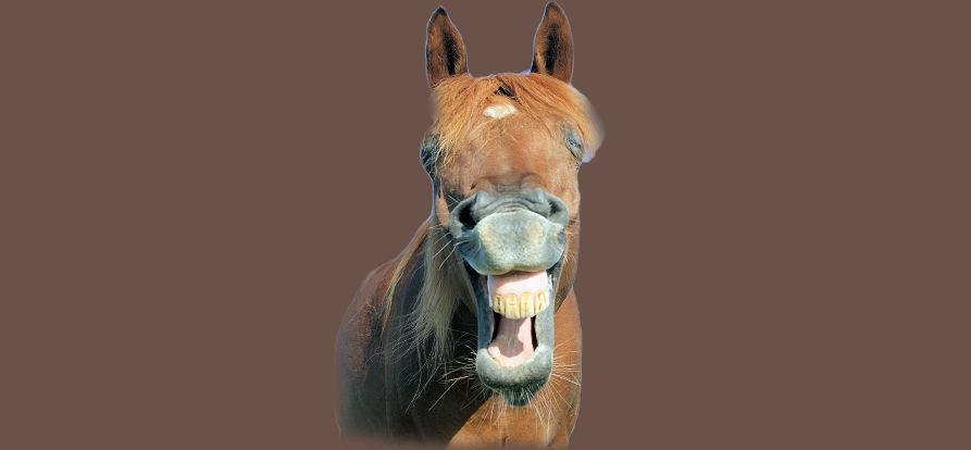 Wohlstandskrankheiten Pferde