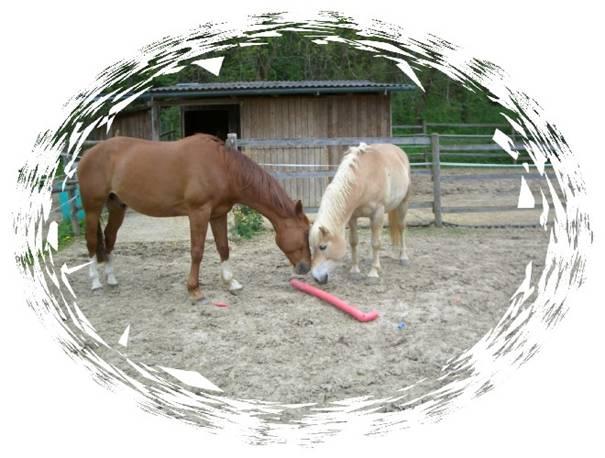 Pferdeerfahrungen