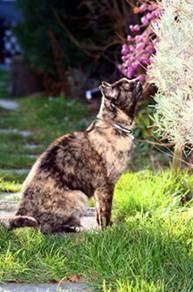 Lebererkrankungen bei Katzen