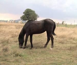 Pferd zu dünn