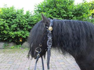 Pferd mit Sommerekzem