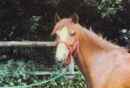 Pferdehimmel