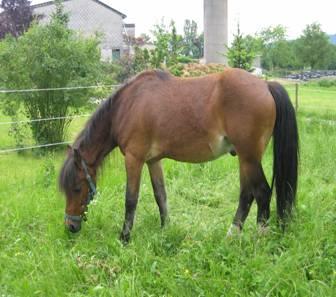 Atemwegsprobleme beim Pferd