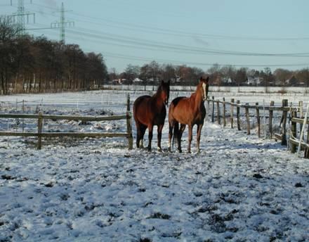 Pferde Erfahrungen tierheilpraxis