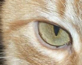Haaranalyse für Katzen